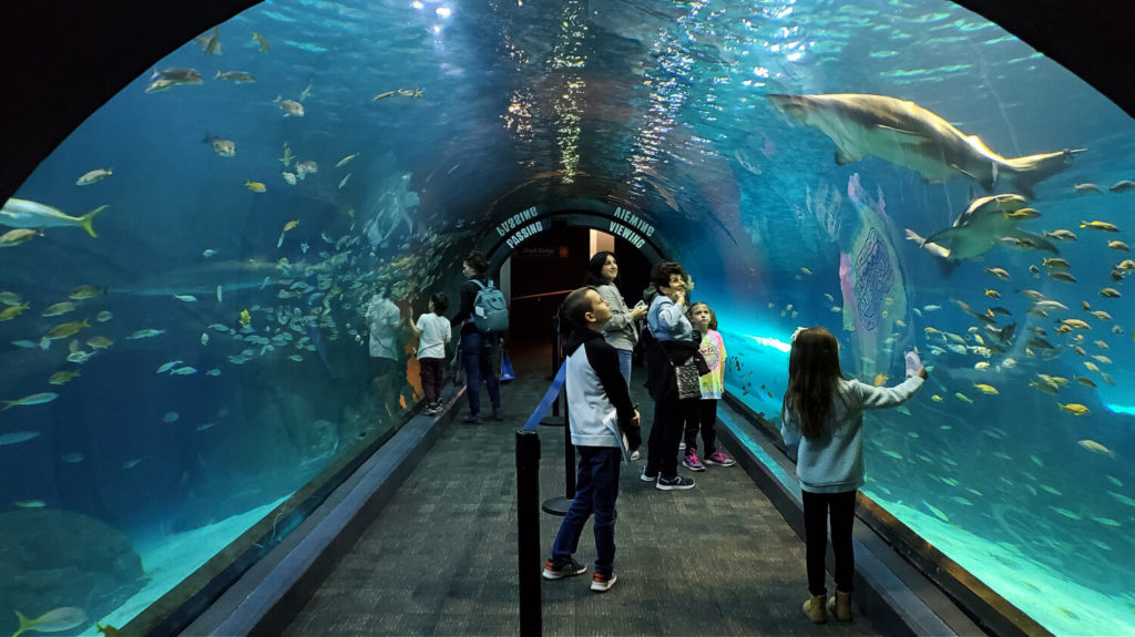 Adventure Aquarium in New Jersey - Where the Wild Kids Wander - A Family Travel Blog
