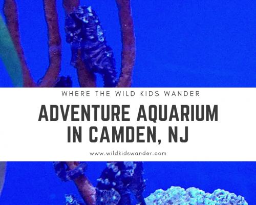 Adventure Aquarium in Camden, NJ - Where the Wild Kids